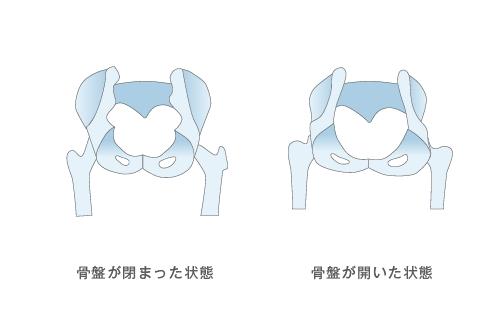 骨盤の開き比較
